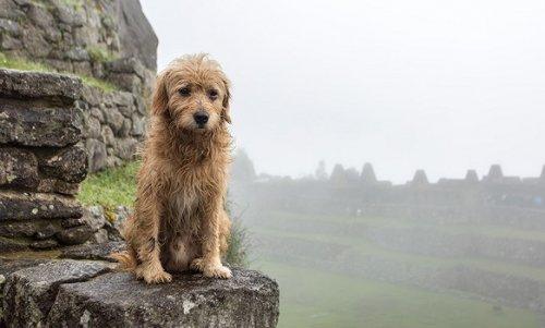 Сайт федерации биатлона Украины «закрыла» грустная собака - «Спорт»
