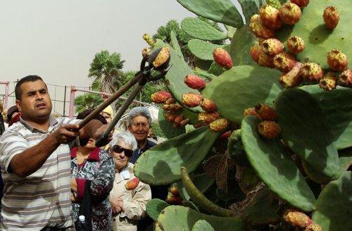 Традиции тунисцев, непонятные для нас ! - «Фото»