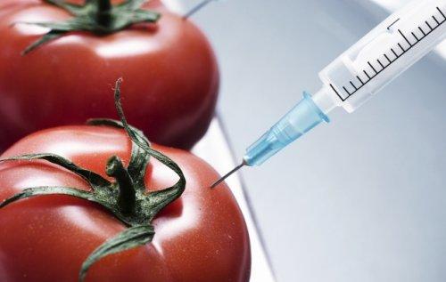 ВСловакии перестали выращивать генномодифицированные культуры. - «Технологии»
