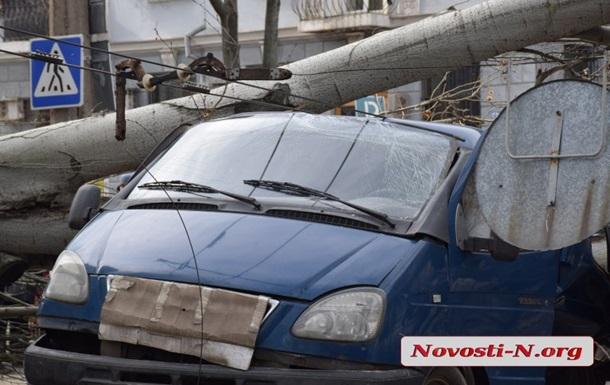 В Николаеве рухнувшее дерево раздавило авто